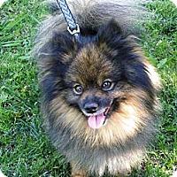 Adopt A Pet :: Aatu - Hesperus, CO