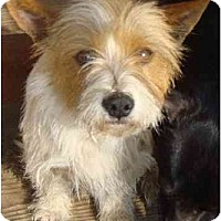Adopt A Pet :: STAR - Fowler, CA