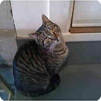 Adopt A Pet :: Keeper  (SC) - Little Falls, NJ