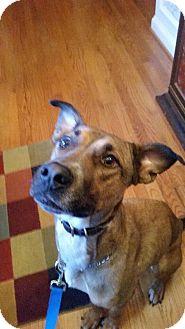 Labrador Retriever/Terrier (Unknown Type, Medium) Mix Dog for adoption in Martinez, Georgia - Donte