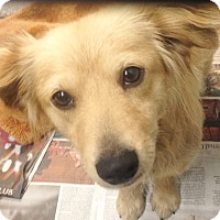 Adopt A Pet :: PEACHES - Pompton Lakes, NJ