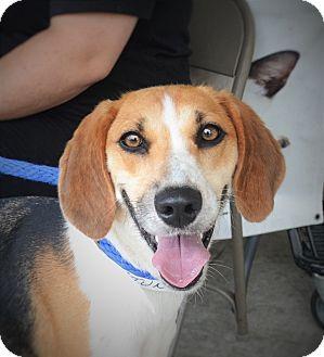 Hound (Unknown Type) Mix Dog for adoption in Wilmington, North Carolina - Petunia