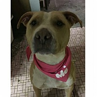 Adopt A Pet :: Rose - East McKeesport, PA