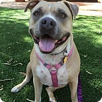 Adopt A Pet :: MAMAS - Gilbert, AZ