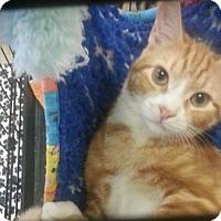 Adopt A Pet :: Fanta - Riverview, FL