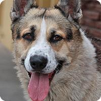 Adopt A Pet :: Zig von Lollar - Los Angeles, CA