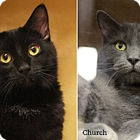 Adopt A Pet :: Harry & Church - Oakville, ON