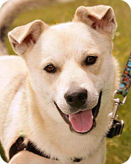 Shepherd (Unknown Type)/Husky Mix Dog for adoption in Bellingham, Washington - Nanook