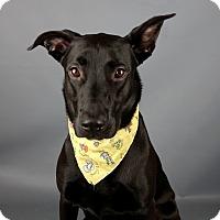 Adopt A Pet :: Arwen - Columbia, IL