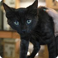 Adopt A Pet :: Rico - Palatine, IL