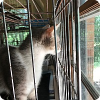 Adopt A Pet :: Sweetie Pie - Ashland, AL