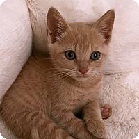 Adopt A Pet :: Kylie - Durham, NC