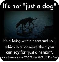 Boston Terrier/Pug Mix Puppy for adoption in Edon, Ohio - Davina