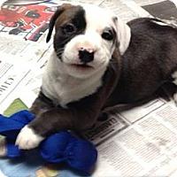 Adopt A Pet :: Mabeline - Burr Ridge, IL