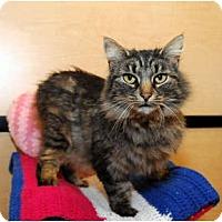 Adopt A Pet :: Tigger - Farmingdale, NY