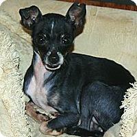 Adopt A Pet :: Sasha - Westfield, IN