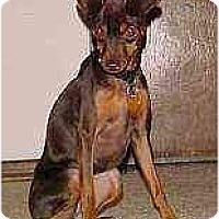 Adopt A Pet :: Sophia May - Florissant, MO