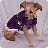 Adopt A Pet :: Mindy - San Angelo, TX