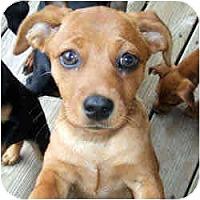 Adopt A Pet :: Madison - Swiftwater, PA