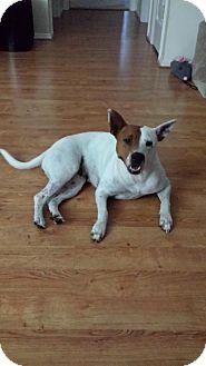 Pit Bull Terrier Mix Dog for adoption in Satellite Beach, Florida - Sannaria