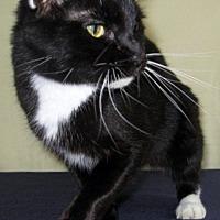 Adopt A Pet :: Oreo - Conroe, TX