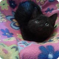 Adopt A Pet :: Zoey - Port Republic, MD