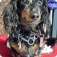 Adopt A Pet :: Rocky - Toronto, ON