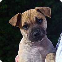 Adopt A Pet :: Blossom*ADOPTION PENDING* - Mill Creek, WA