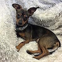 Adopt A Pet :: Jack aka Jax - San Juan Capistrano, CA