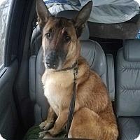 Adopt A Pet :: William - Louisville, KY