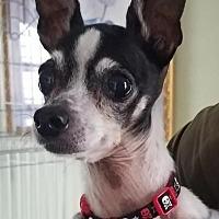 Adopt A Pet :: Arabella - Breinigsville, PA