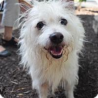 Adopt A Pet :: Chance - Washington, DC