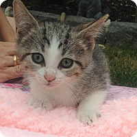 Adopt A Pet :: Donnie - Staten Island, NY