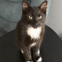 Adopt A Pet :: Frack - Acworth, GA