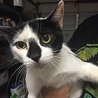 Adopt A Pet :: Andrea (courtesy listing jenny - Homestead, FL