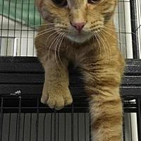 Adopt A Pet :: Nacho - Bourbonnais, IL