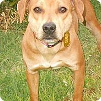 Adopt A Pet :: BLOSSOM - Phoenix, AZ