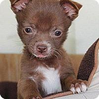 Adopt A Pet :: Tiny Kitty - La Habra Heights, CA