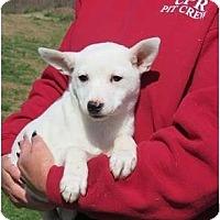 Adopt A Pet :: Stella - Westbrook, CT