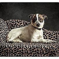 Adopt A Pet :: Gracie - Owensboro, KY