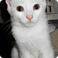 Adopt A Pet :: Vanilla Bean - Chattanooga, TN