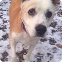 Adopt A Pet :: Haley - Oak Ridge, NJ