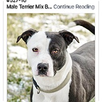 Adopt A Pet :: Cagney - ADOPTED! - Zanesville, OH