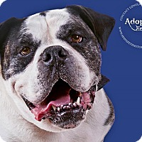 Adopt A Pet :: Duke - Sacramento, CA