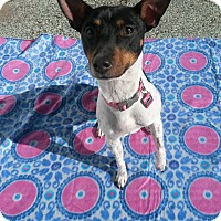 Adopt A Pet :: Sasha - Acushnet, MA