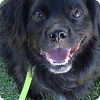 Adopt A Pet :: Charlie - Meridian, ID