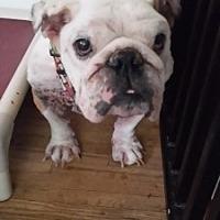 Adopt A Pet :: Bishop - Santa Ana, CA