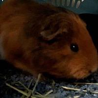 Adopt A Pet :: Oliver - Edmonton, AB