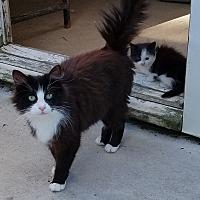 Adopt A Pet :: Mellie - Portage, MI