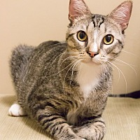 Adopt A Pet :: Fango - Chicago, IL